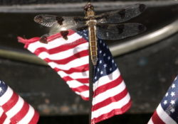 Dragonfly totem appears on the American Flag