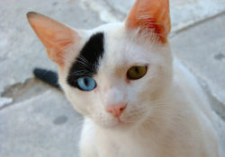 Is your cat happy at home? Tips on creating a 'cat-friendly' home from the AVMA